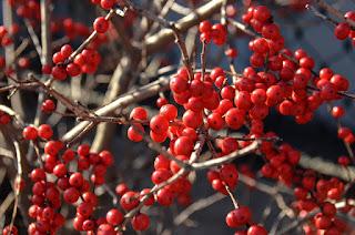 Frutti antiossidanti