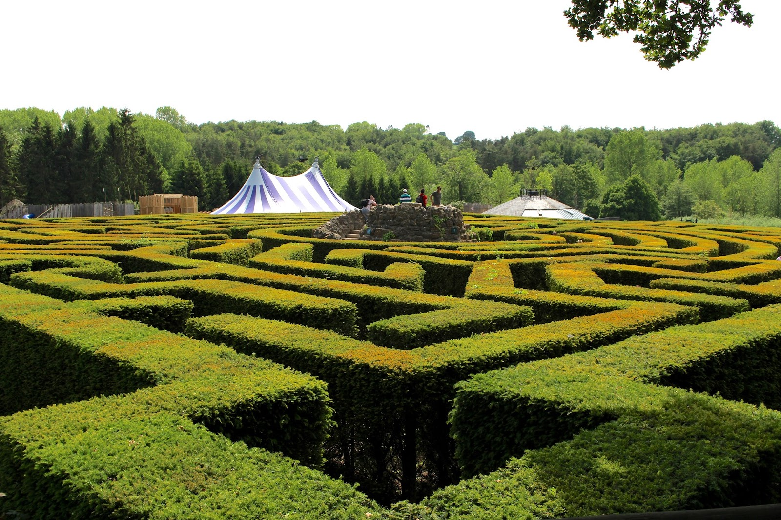 Aerial view of maze at leeds castle