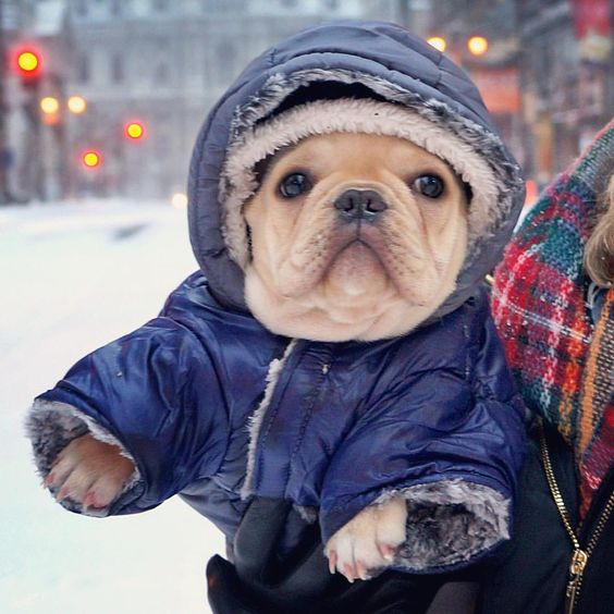 Beautiful winter scene with dog in snowsuit in snow in city