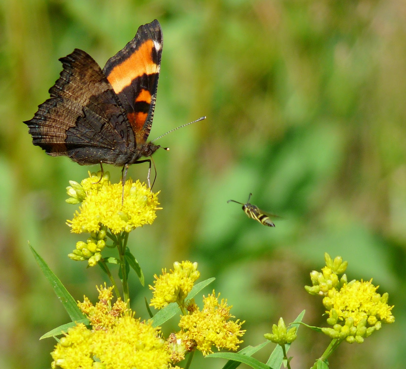 The Retirement Chronicles: Butterflies, Blooms, Bees and ...