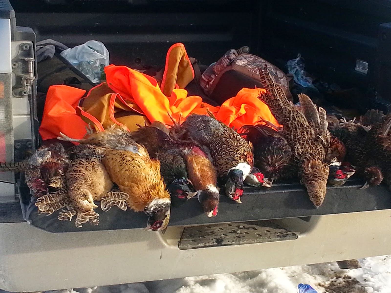robfisherie: Late Winter Pheasant Hunt Northwest PA Game