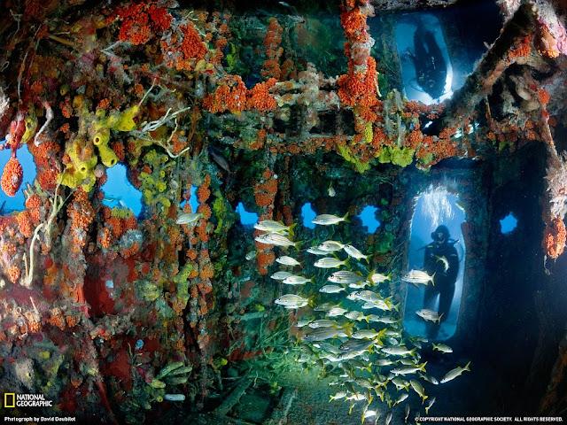 Artificial Reef, Key Largo