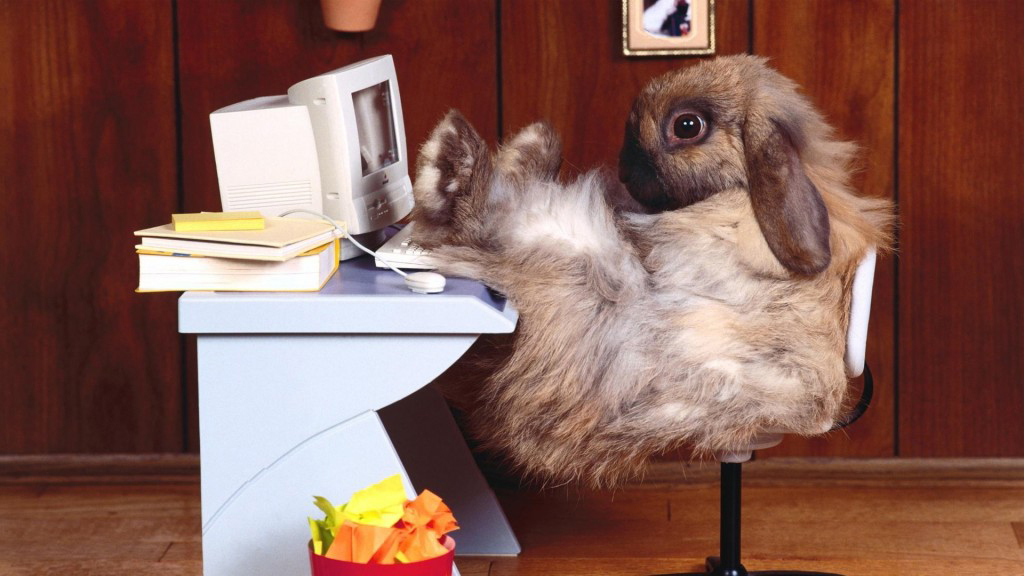 gambar kelinci 1 bulan gambar kelinci umur 1 bulan gambar kelinci umur 1 minggu gambar kelinci umur 10 hari gambar kelinci usia 1 bulan