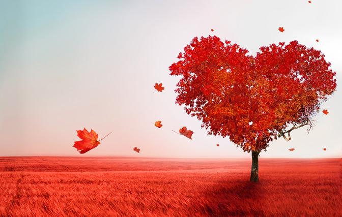 Árbol en forma de corazón - El amor verdadero