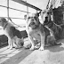 The Best Guide to the Canine Victims on Titanic