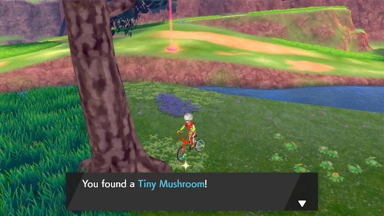 Wild Area Hidden Items