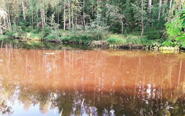 Miltä näyttää humuspitoinen vesi