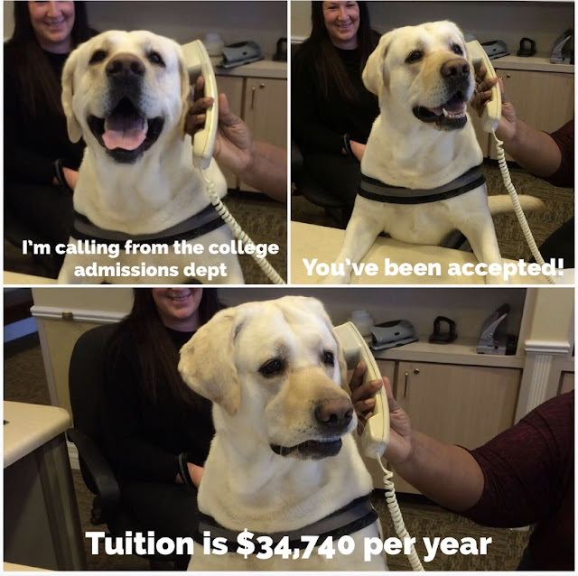 dog phone meme - I'm calling from the college admissions dept You've been accepted! Tuition is $34,740 per year