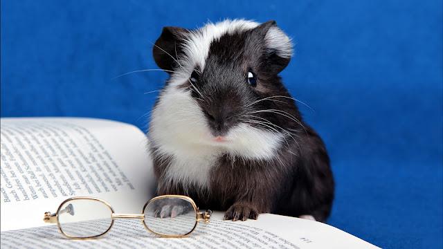 bestsellery literatury dziecięcej