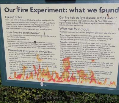 Kirstenbosch Fire and Fynbos
