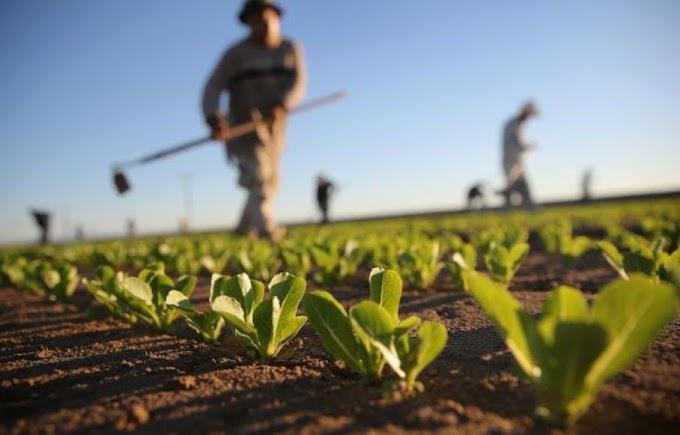 Fase 3, riapertura frontiere salva 1/4 raccolti