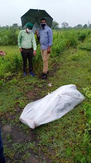 गुरुवार से लापता शिक्षक धर्मेन्द्र कुशवाह का, दरियापुर रोड पर खेत में पडा मिला शव