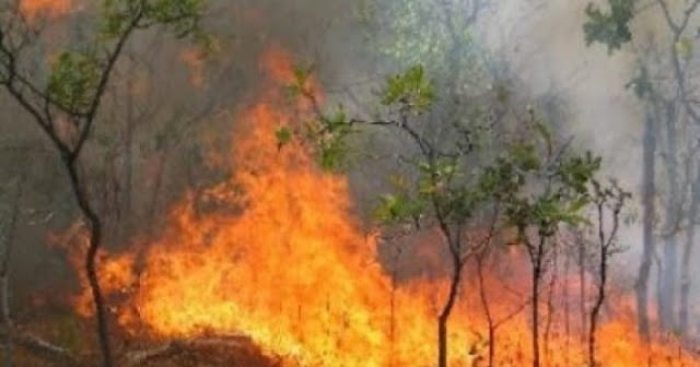 Three powerful fire heaths in Librazhd forest