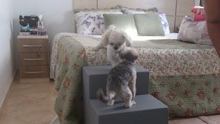 escadas para cães ativos