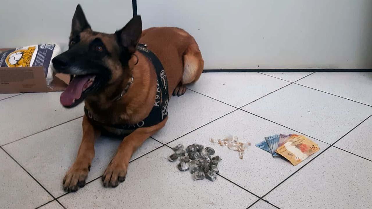 Botucatu: Cão farejador encontra droga em terreno e dois traficantes acabam presos