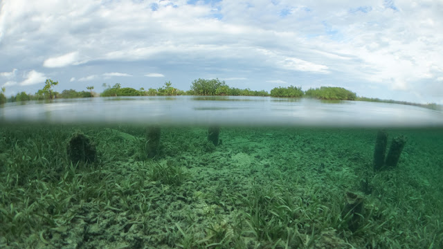 Over under photo mangroves