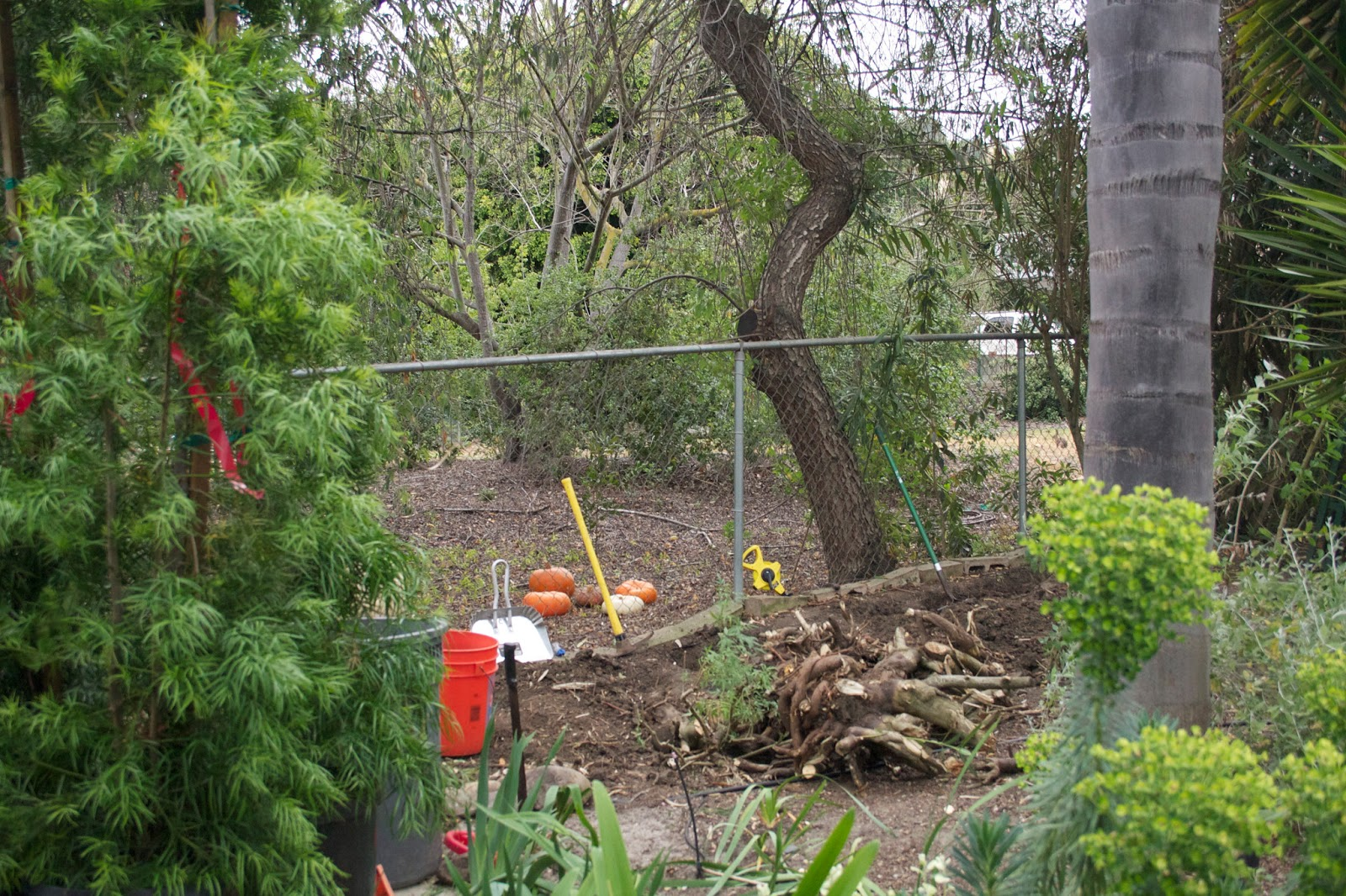 The Gardens Of Petersonville The Big Dig