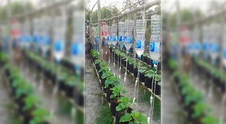 Pengunaan infus pada tanaman dan cara pemakaian