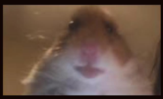 Download Hamster PP Tiktok