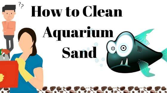 How to Clean Aquarium Sand?
