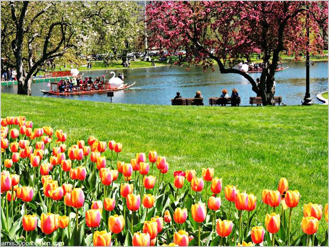 Mi Foto del Boston Public Garden en mi Entrevista del Cext: A mis 30 por Boston
