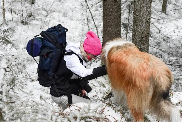 Vaellus koiran kanssa