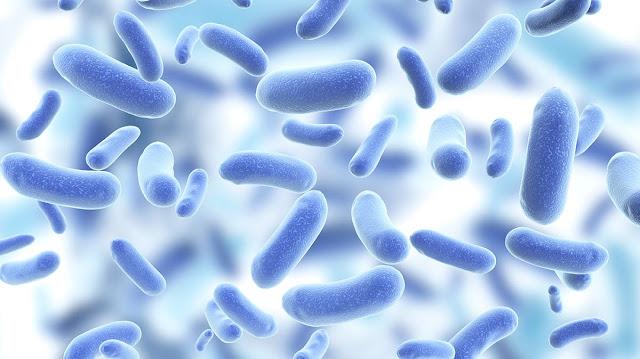 Weak point in pathogenic bacteria