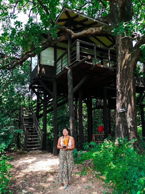 tree house accommodation