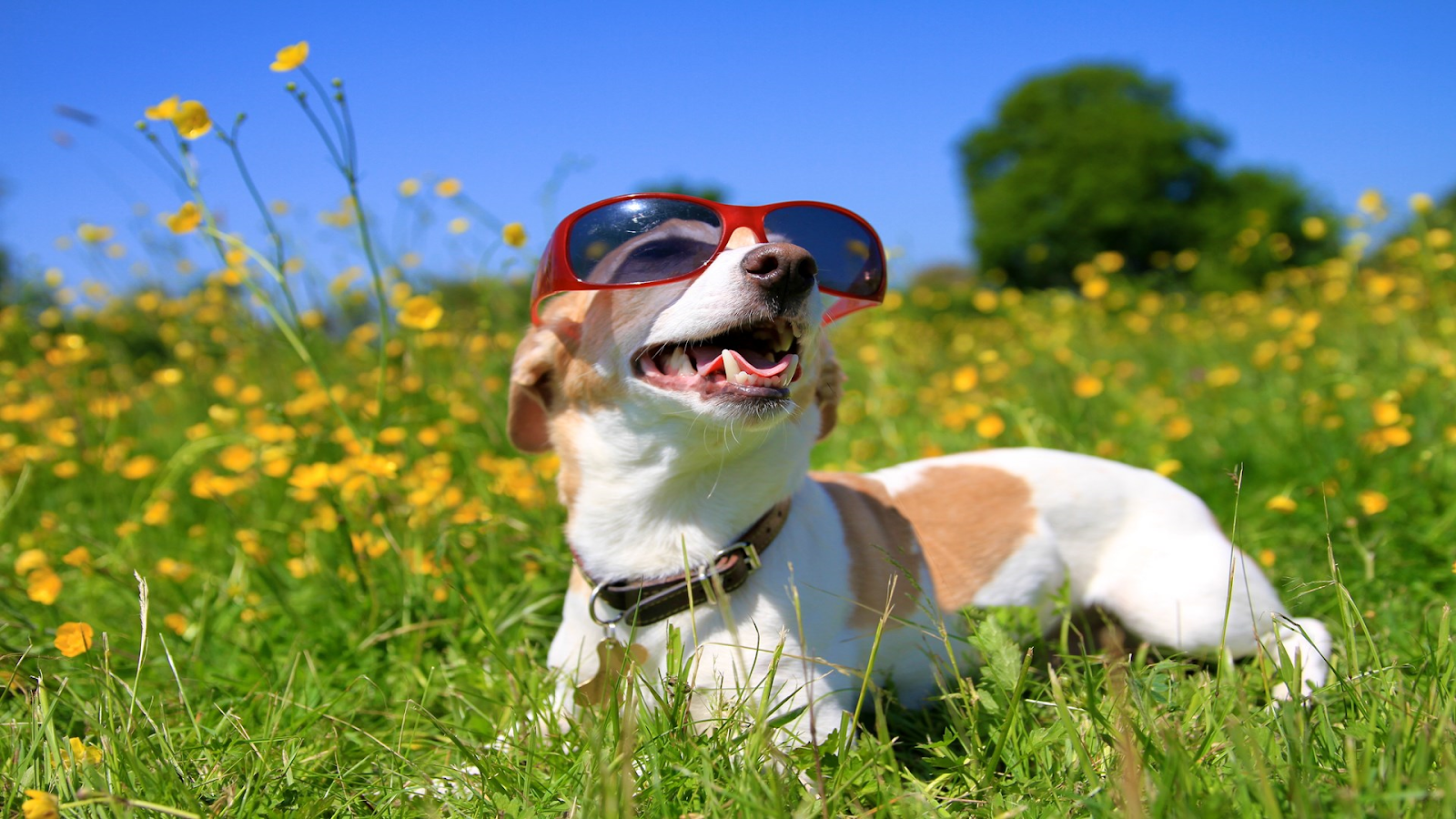 Download Dogs in Shades, Tema per Windows 10