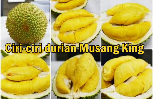 Ciri-ciri khas durian Musang King