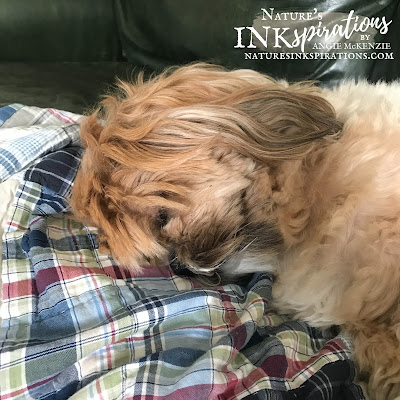 Sleeping pup with hair in his eyes keeping me company while I blog.  |  Nature's INKspirations by Angie McKenzie