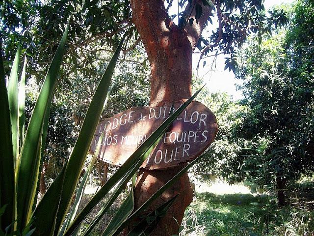 A LA DECOUVERTE DU PARC DE DJIBELOR A ZIGUINCHOR : Parc, animaux, visite, tourisme, sauvage, oiseaux, LEUKSENEGAL, Dakar, Sénégal, Afrique