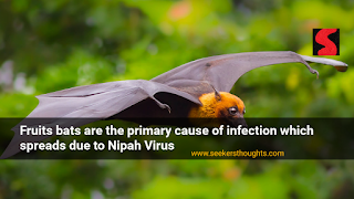 cause-of-nipah-virus