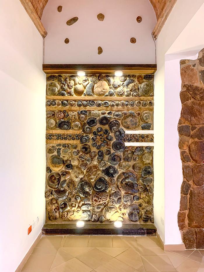 Ammonites wall