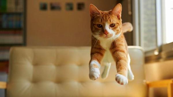 Οι γάτες  δεν χρειάζονται κηδεμόνα για να νιώσουν ασφάλεια