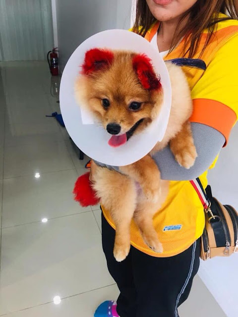 Dog Allergy On Dye/World of Buzz