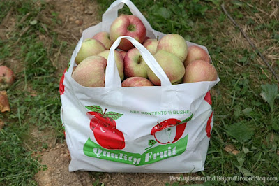 Fall Apple Picking at Strite's Orchard Farm Market in Harrisburg Pennsylvania