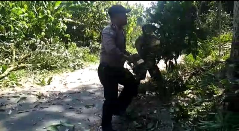 Wujudkan Kamseltibcarlantas, Brigadir Aspin Hasibuan Singkirkan Pohon dari Jalan