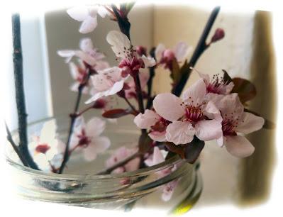 close up mason jar spring plum blossoms