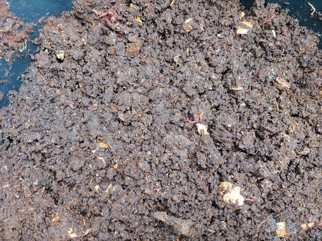 A bucket of compost.  There are worms on the top of the compost
