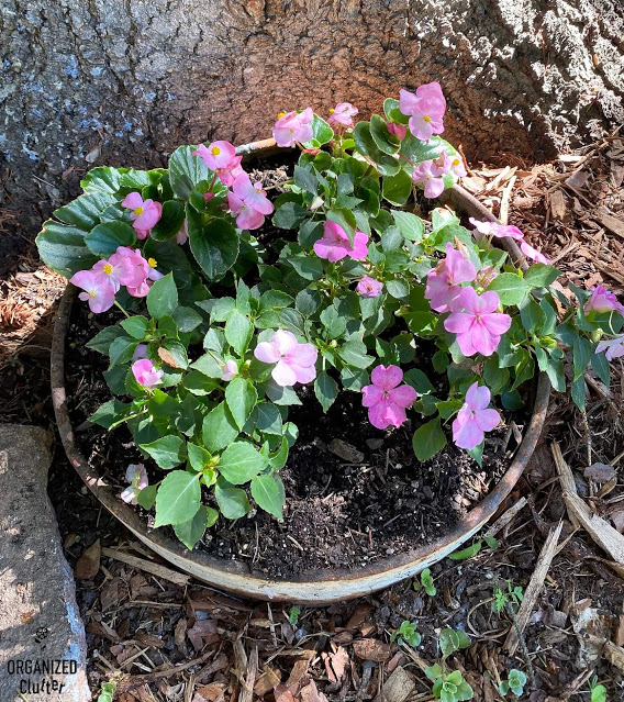 Photo of impatiens & begonias in a metal planter under a tree