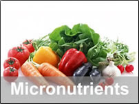 The Queen of Shibas: Micronutrients vs. Macronutrients