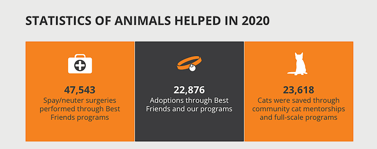 digital annual report example from the Best Friends Animal Society