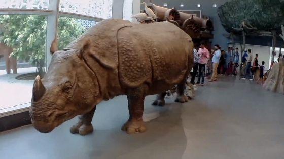 Bihar Museum Animal
