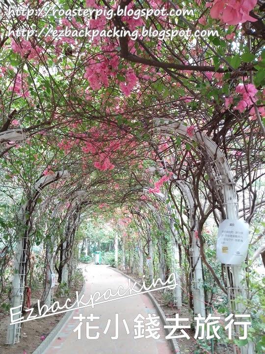 香港簕杜鵑好去處