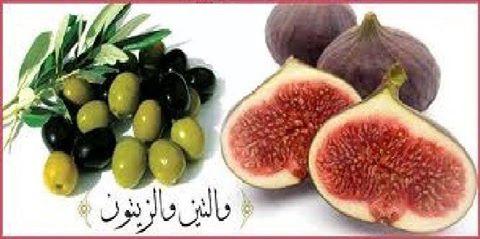 فوائد المأكولات المذكورة في القرآن الكريم