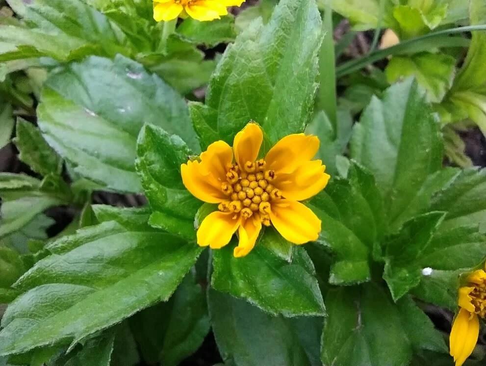 vivo Y31 Camera Sample - Macro, Tiny Flower