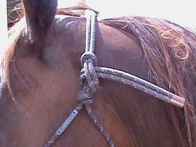 Functional Horsemanship Tying A Rope Halter