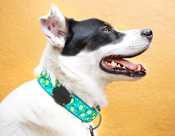 australian-airtag-pet-collar
