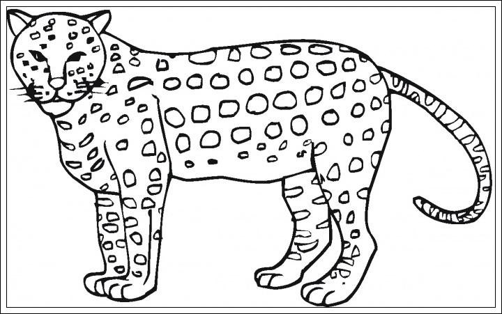 ausmalbilder gepard kostenlos  ausmalbilder